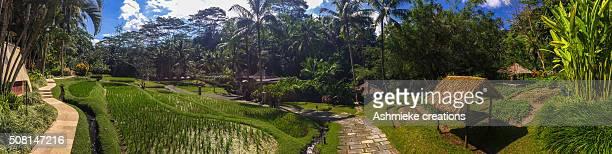 Rice patties and gardens of Bali