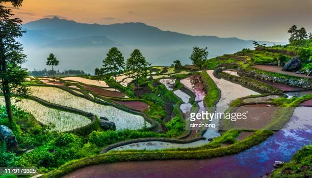 rice terrace against mountain - yuanyang stock-fotos und bilder