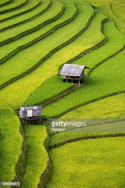 rice terrace and mountain valley in sapa, vietnam. - association of southeast asian nations stock photos and pictures