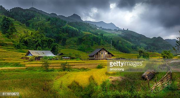 Rice Terrace at North of Vietnam