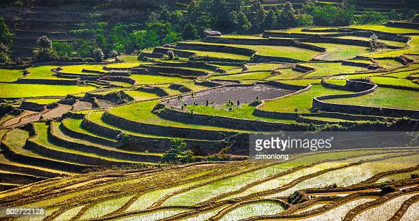 Rice terrace at Yuanyang. China