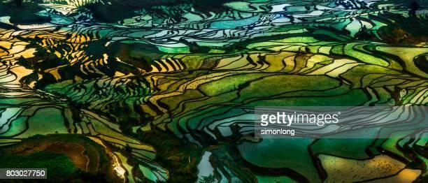 rice terrace at yuanyang. china - yuanyang imagens e fotografias de stock