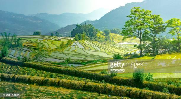 rice terrace at yuanyang, yunnan, china - yunnan province stock pictures, royalty-free photos & images