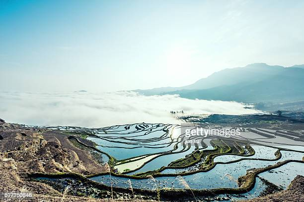 Rice terrace at Yuanyang. Yunnan.China