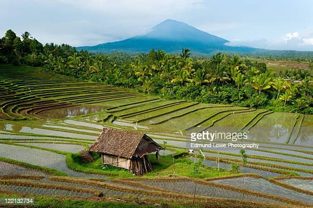 rice terrace, bali - rice terrace stockfoto's en -beelden