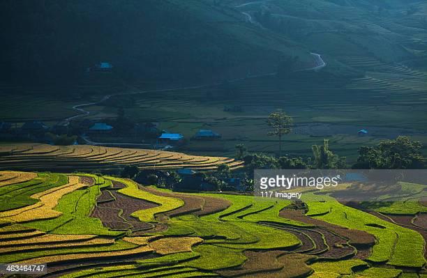 Rice terrace fields in Tu Le valley, North Vietnam