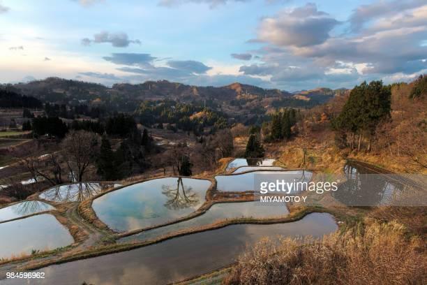 rice terrace in autumn - miyamoto y ストックフォトと画像