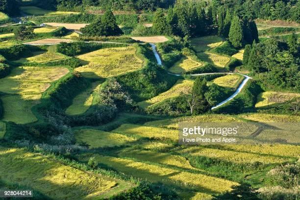 Rice terrace of Tokamachi-shi