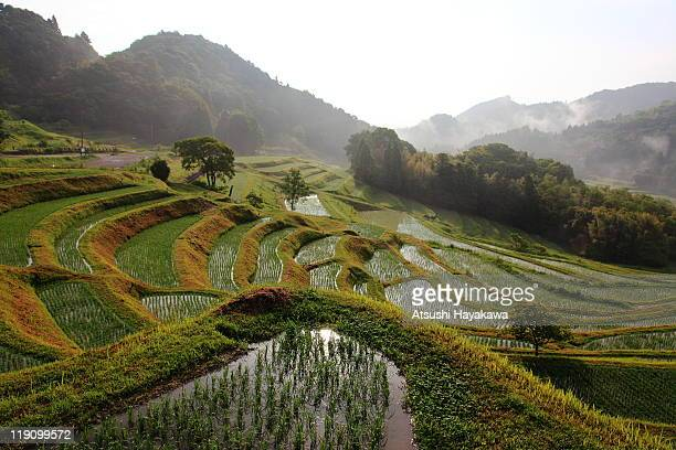rice terrace - chiba city stock pictures, royalty-free photos & images
