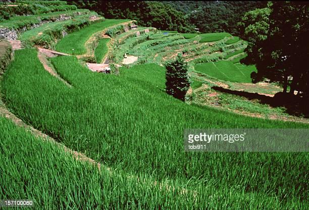 rice terrace - kagawa ストックフォトと画像