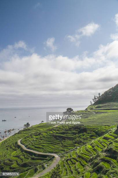 Rice terrace with sea view