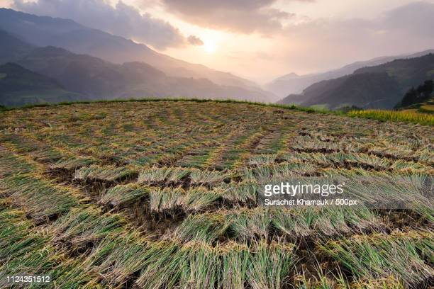 rice terraced of mu cang chai. - mù cang chải stock pictures, royalty-free photos & images