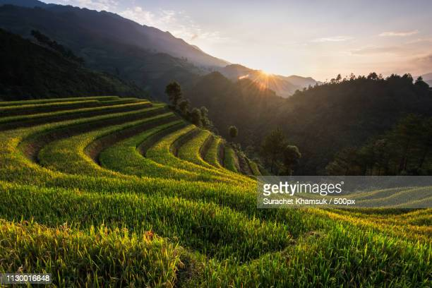 rice terraced of mu cang chai - mù cang chải stock pictures, royalty-free photos & images