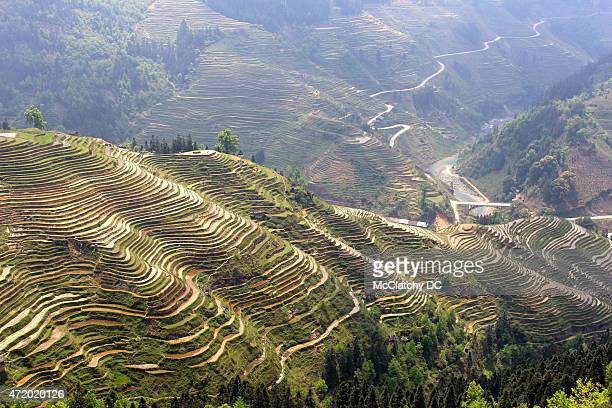 Rice terraces and Miao villages stretch down the hillsides near Rongjiang in Guizhou province China on April 4 2015 The Miao who are related to the...