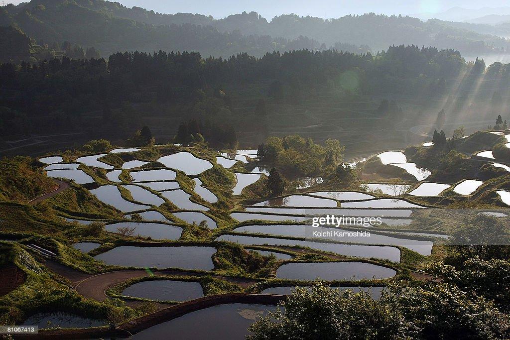 Rice Terraces Prepare For Planting Season : News Photo