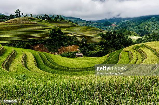 rice terraces at la pan tan, mu cang chai, yen bai - son la stock pictures, royalty-free photos & images