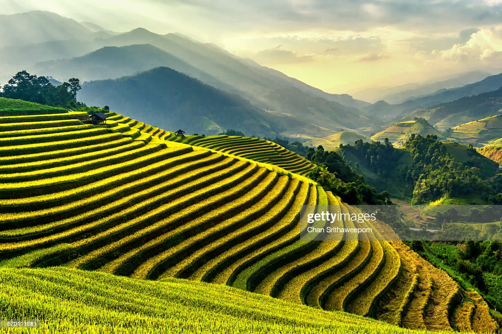 Rice terraces at Mu Cang Chai , Vietnam : Stock Photo