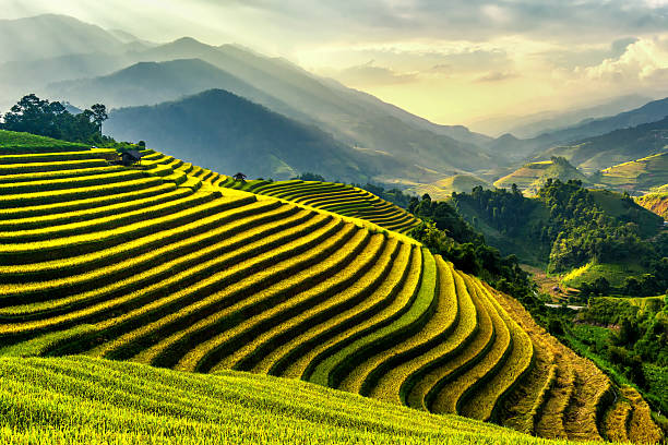 Rice Terraces At Mu Cang Chai , Vietnam Wall Art