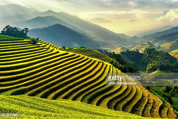 Rice terraces at Mu Cang Chai , Vietnam