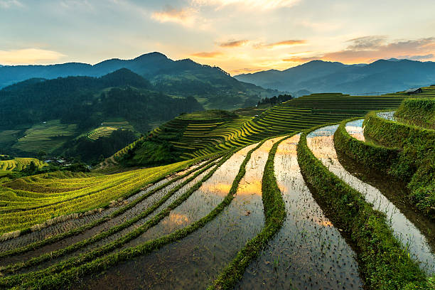 Rice Terraces At Mu Cang Chai, Vietnam Wall Art