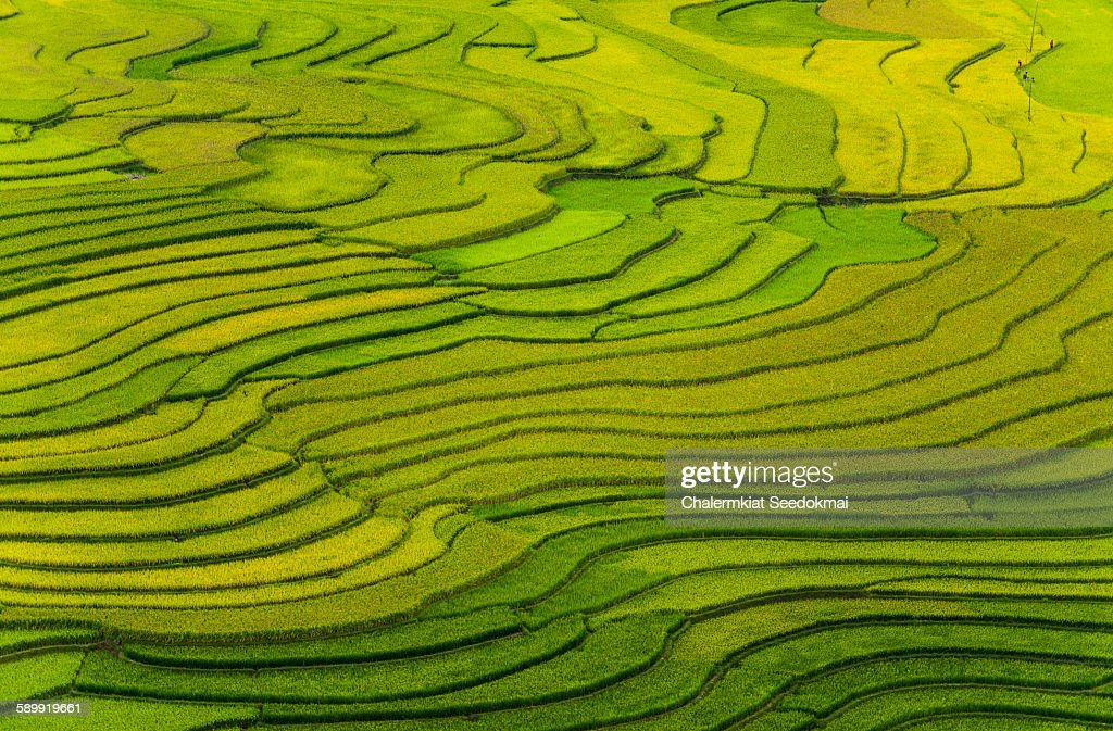 Rice terraces at Mu Cang Chai, Vietnam : Stockfoto