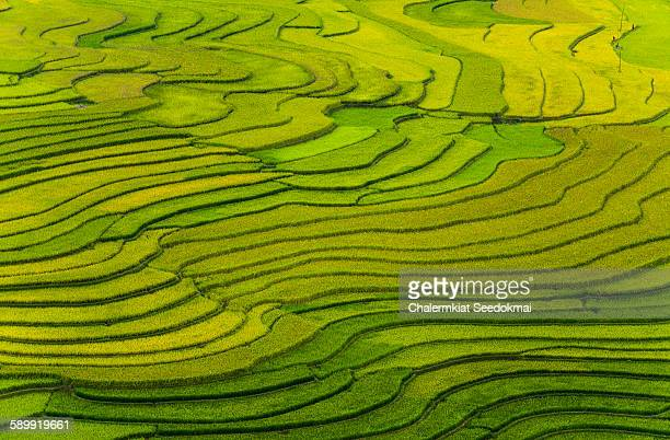 rice terraces at mu cang chai, vietnam - rice terrace stockfoto's en -beelden