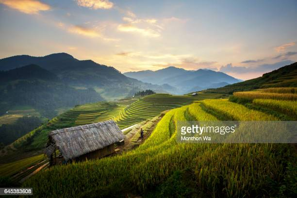 Rice terraces at Mu Cang Chai, Vietnam