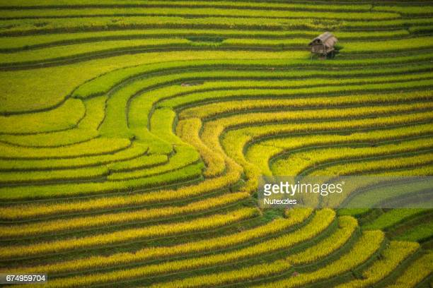 Rice terraces at Mu Cang Chai , Vietnam