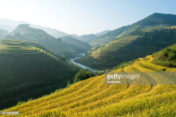 rice terraces at mu cang chai , vietnam - alpes maritimes stock pictures, royalty-free photos & images