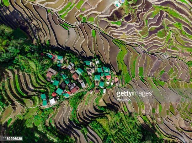 rice terraces drone shot - ルポルタージュ ストックフォトと画像