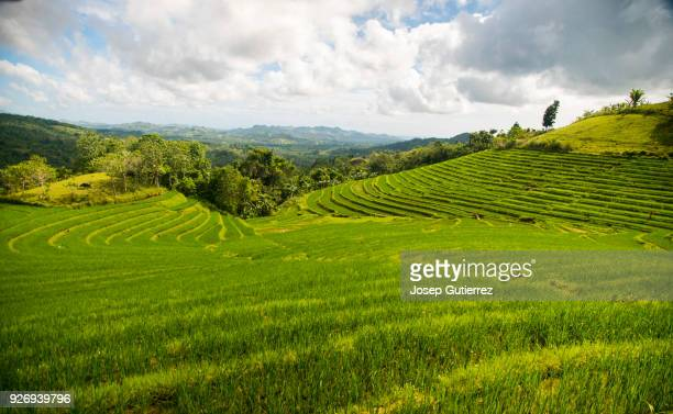 rice terraces fields at bohol cadapdapan - filipino culture stock pictures, royalty-free photos & images
