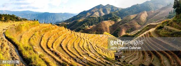 Rice Terraces in Autumn