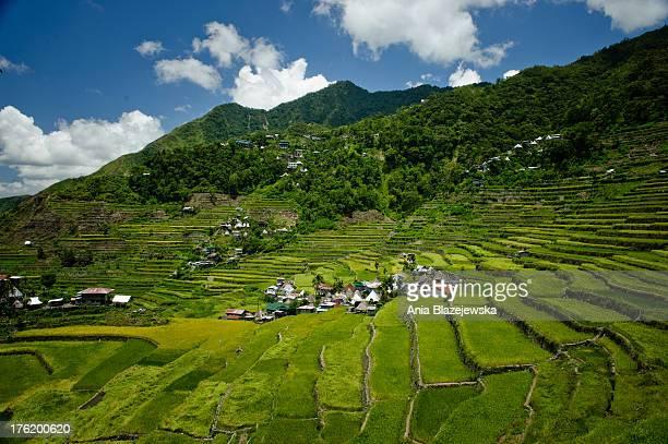 Rice terraces in Batad. Philippines, Ifugao province. Banaue, Batad and Hapao are tiny villages hidden deep among the famous Ifugao, man-made rice...