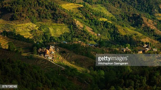 Rice terraces in harvest season in Nagarkot, Nepal