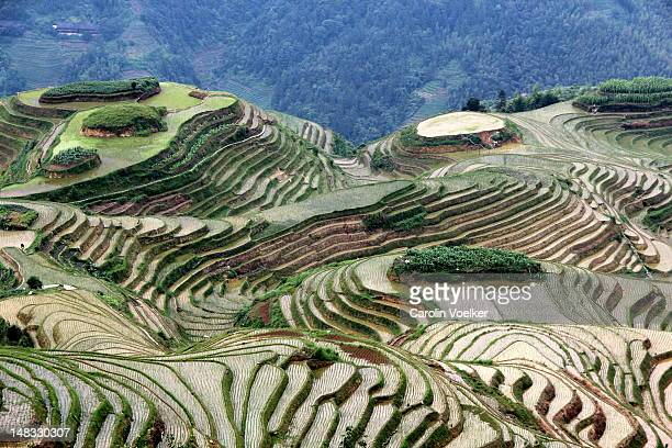 rice terraces in longsheng, china - terraced field stock pictures, royalty-free photos & images
