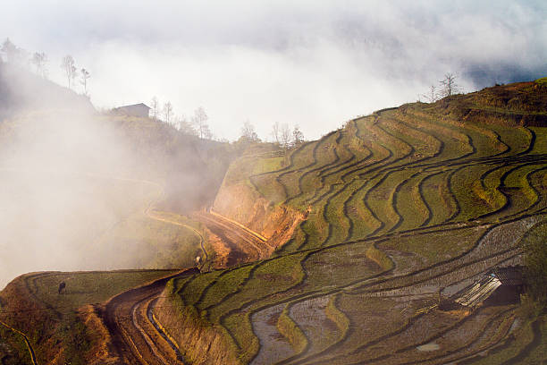 Rice Terraces In Sapa Wall Art