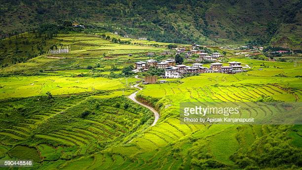 Rice terraces near Chimi Lhakhang Temple