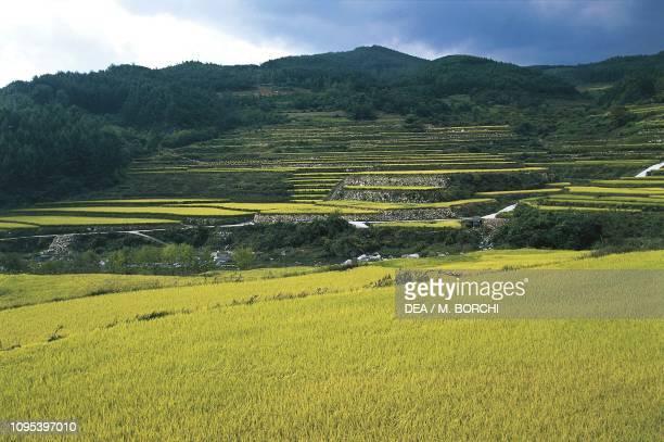 Rice terraces near Haeinsa Temple South Korea