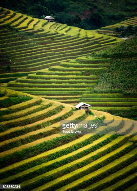 rice terraces of mu cang chai - rice terrace stockfoto's en -beelden