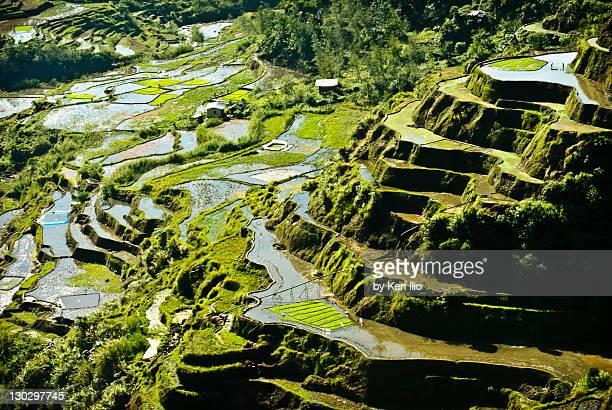 Rice terraces of Philippine Cordilleras