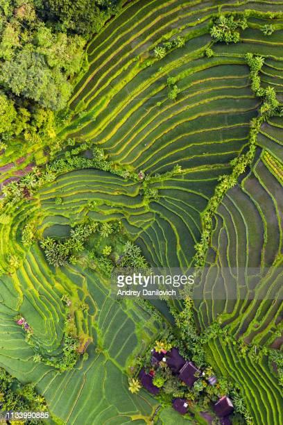 rijstterrassen op bali - rice terrace stockfoto's en -beelden