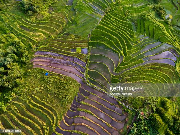 rice terraces on sumba island, indonesia - paddy field stock pictures, royalty-free photos & images