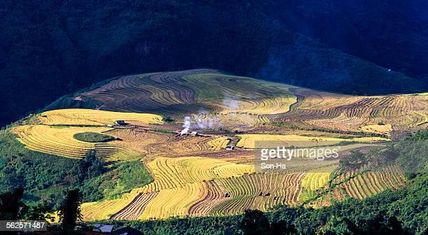 Rice terraces on the mountain