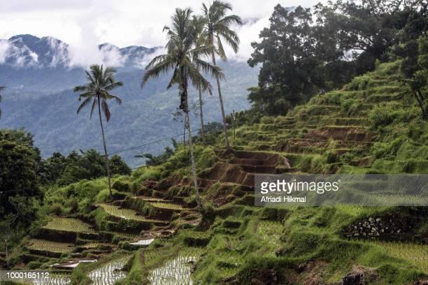 Rice Terraces