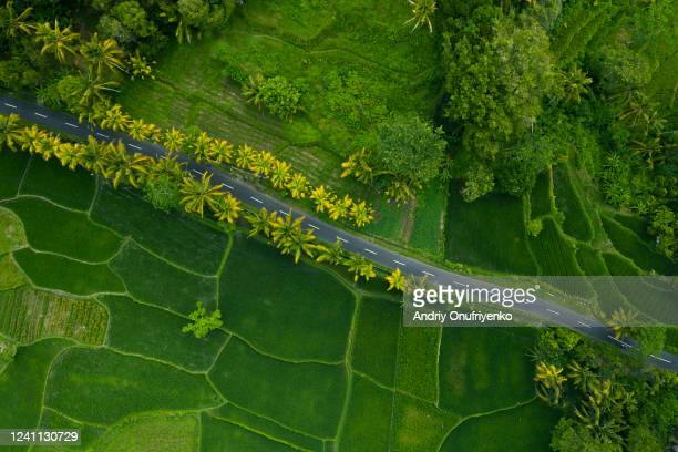 rice terraces. - indonesien stock-fotos und bilder