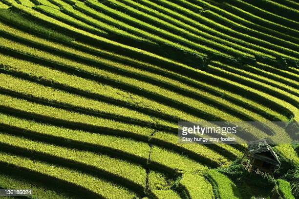 rice terraces - mù cang chải stock pictures, royalty-free photos & images