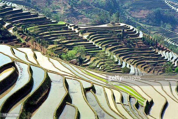 arroz terraces - yuanyang imagens e fotografias de stock