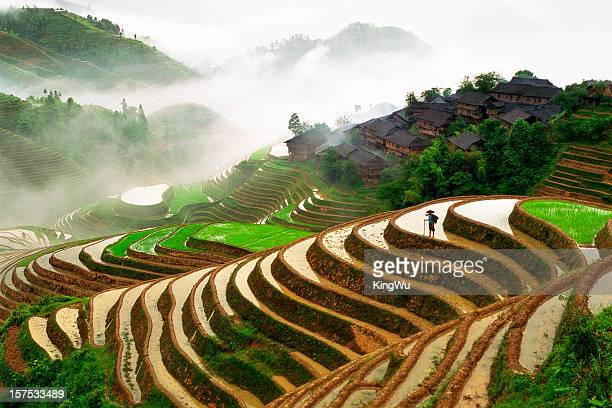 rice terraces - rice terrace stockfoto's en -beelden