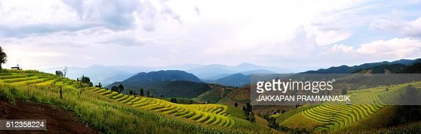 rice terraces - rice terrace stockfoto's en -beelden
