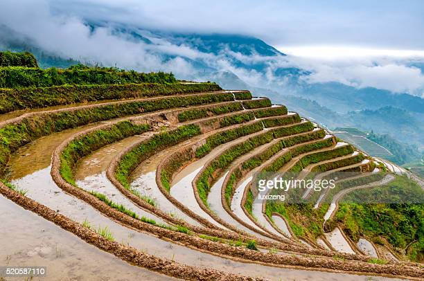 Arroz Terraces